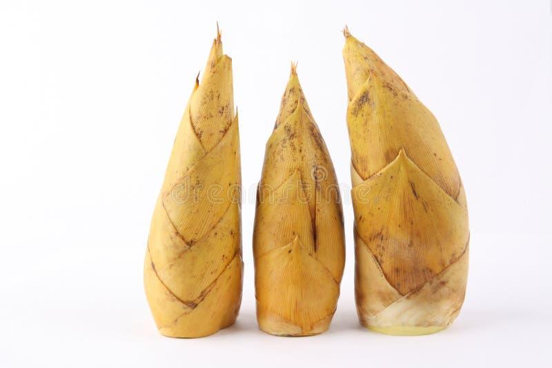 bambus strzela zima obrazy royalty free