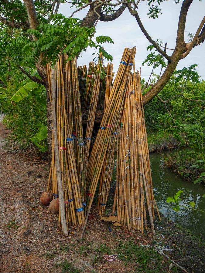 Bambus umieszcza w ogródzie zdjęcia stock