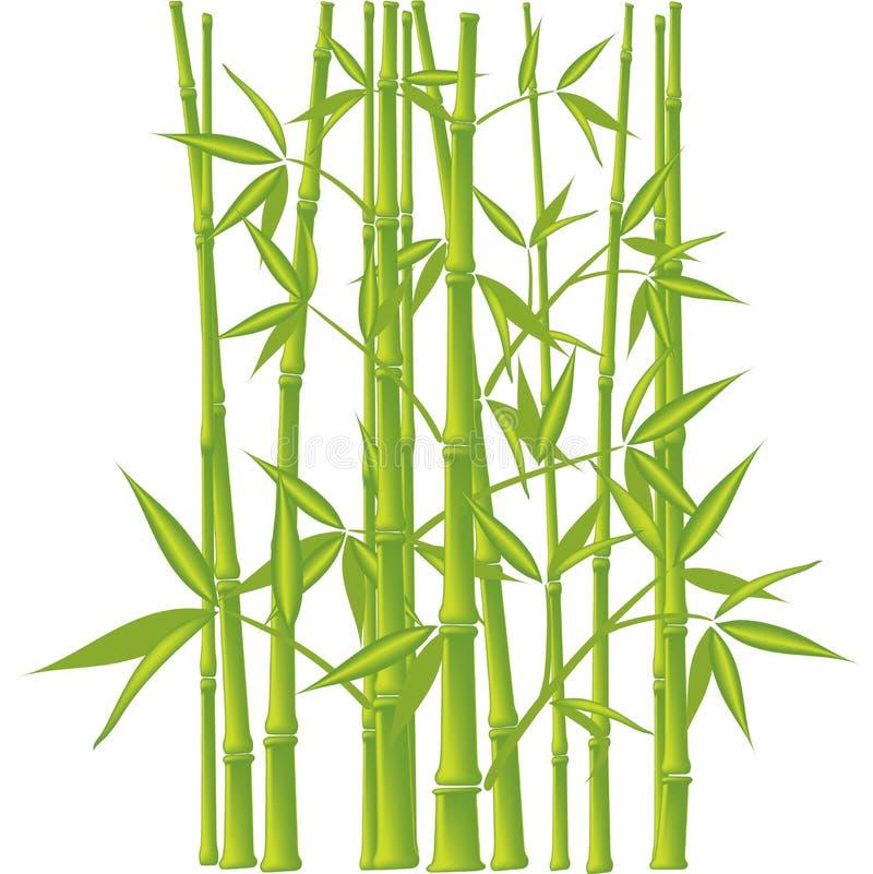 Bambus, Vektor (Ineinander greifen) stock abbildung