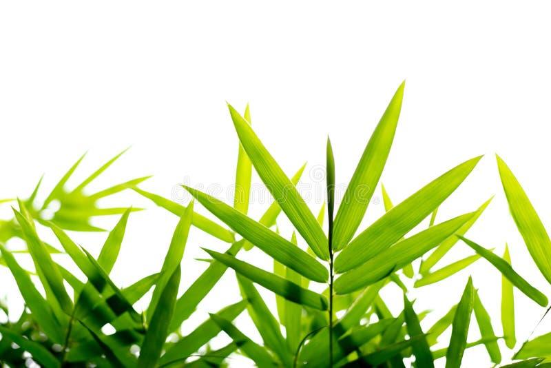Bambus verlässt Hintergrund lokalisiert stockbilder