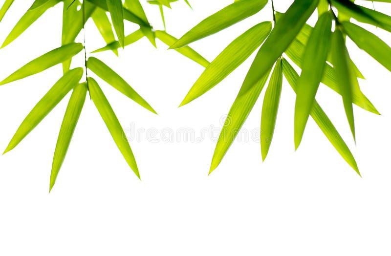 Bambus verlässt Hintergrund lokalisiert lizenzfreies stockfoto