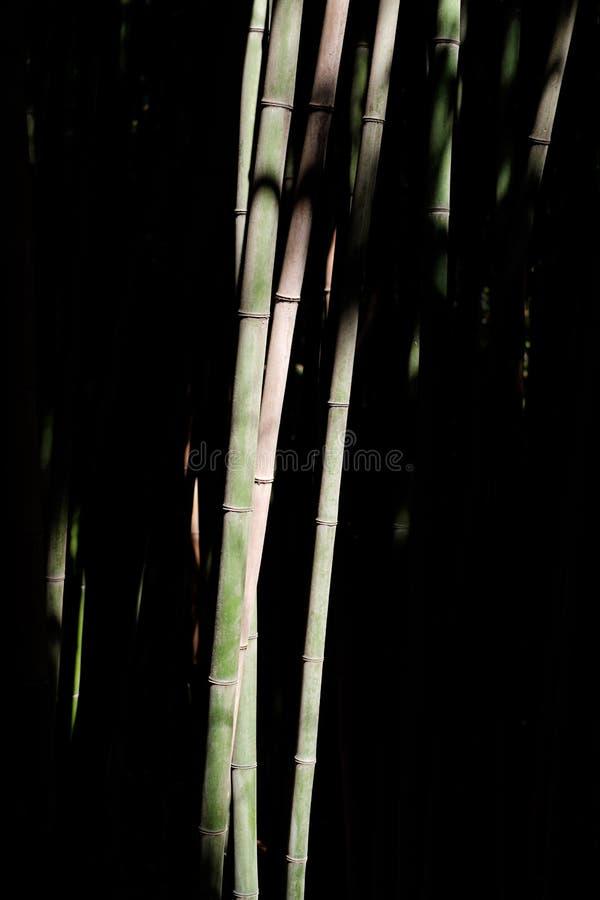 Bambus w bambusowym gaju zdjęcie stock