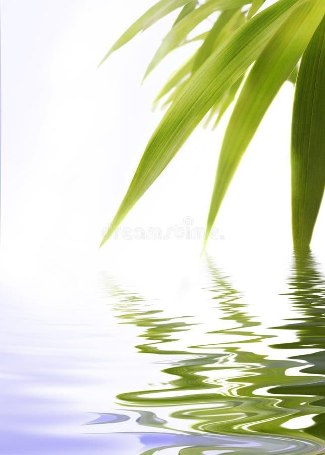 bambus woda obraz royalty free