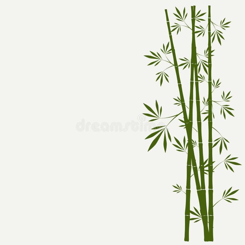 Bambus wywodzi się z liśćmi na białym tle ilustracji
