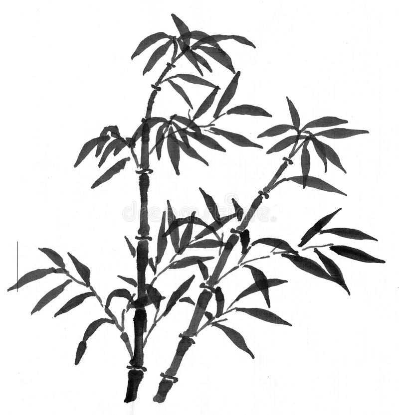 Bambus z liśćmi royalty ilustracja