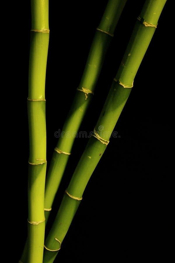 Download Bambusa czerń obraz stock. Obraz złożonej z badyl, badyle - 13327409
