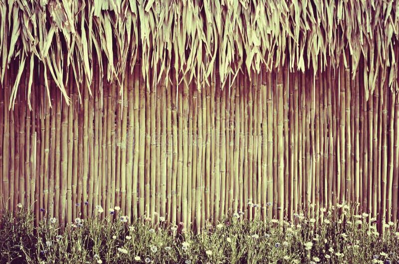 bambusa ogrodzenia kwiat zdjęcia royalty free