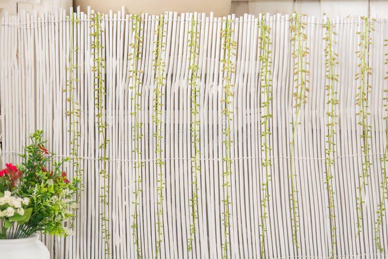 Bambusa ogrodzenia stylu bluszcz zdjęcia royalty free