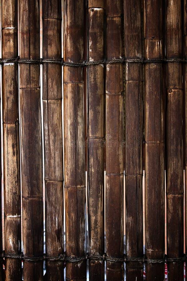 Bambusa ogrodzenie