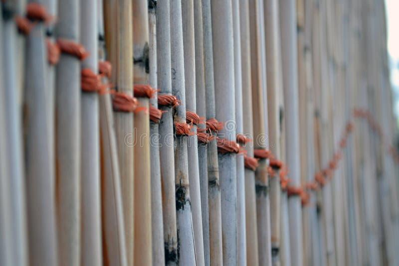 bambusa ogrodzenie zdjęcia stock