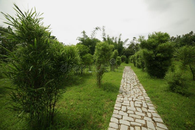 Bambusanlage lizenzfreies stockbild