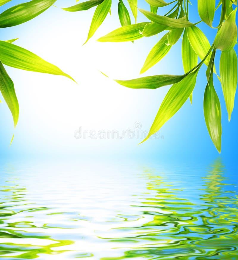 Bambusblätter vektor abbildung