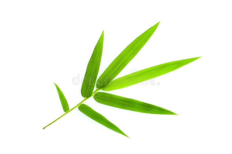 Bambusblatt lizenzfreies stockbild