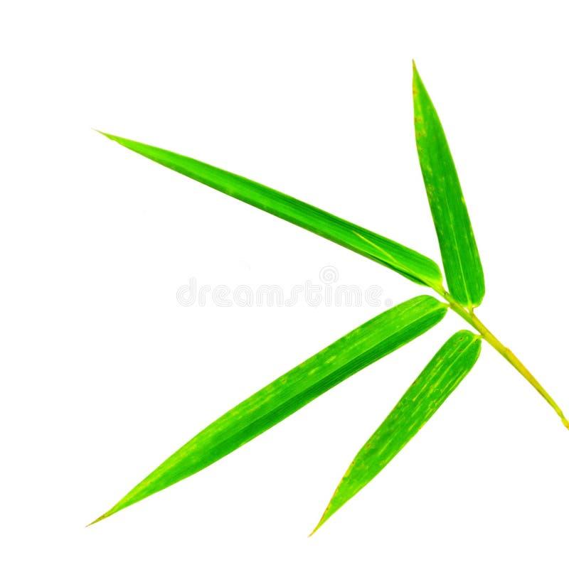 Bambusblatt stockfoto
