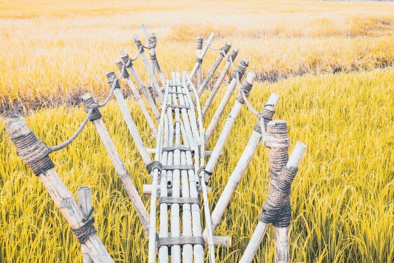 Bambusbrücke ist einheimischer Struktur Gebrauch, der ist, einfangen den Bau, der in das grüne Reisfeld archiviert wird lizenzfreies stockfoto