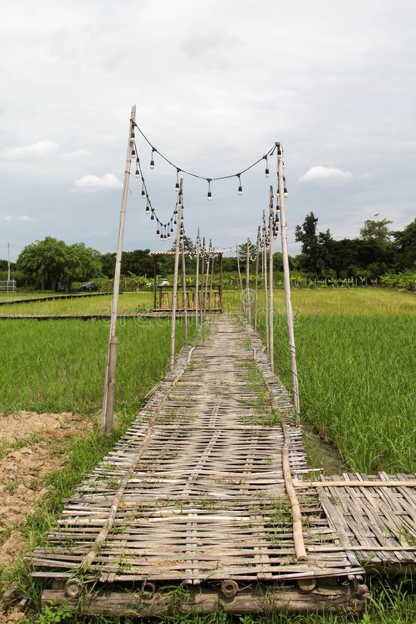 Bambusbr?cke auf Reisfeld lizenzfreies stockfoto