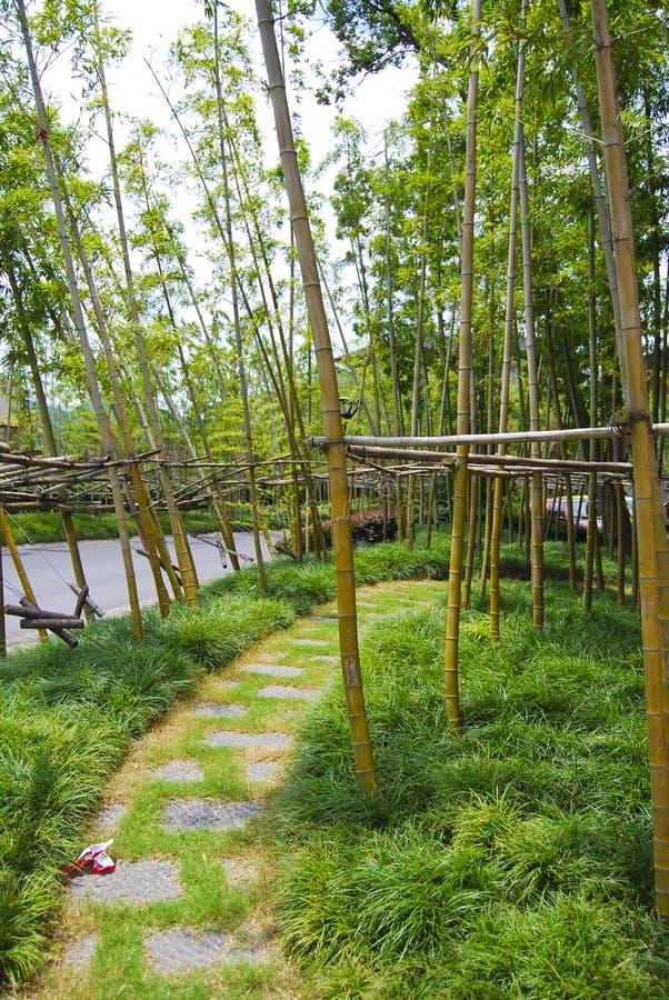 Bambusfelder, China stockfotos