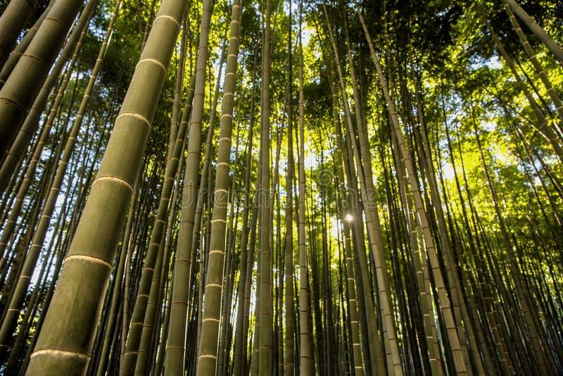 Bambusgarten in Kamakura Japan stockfoto