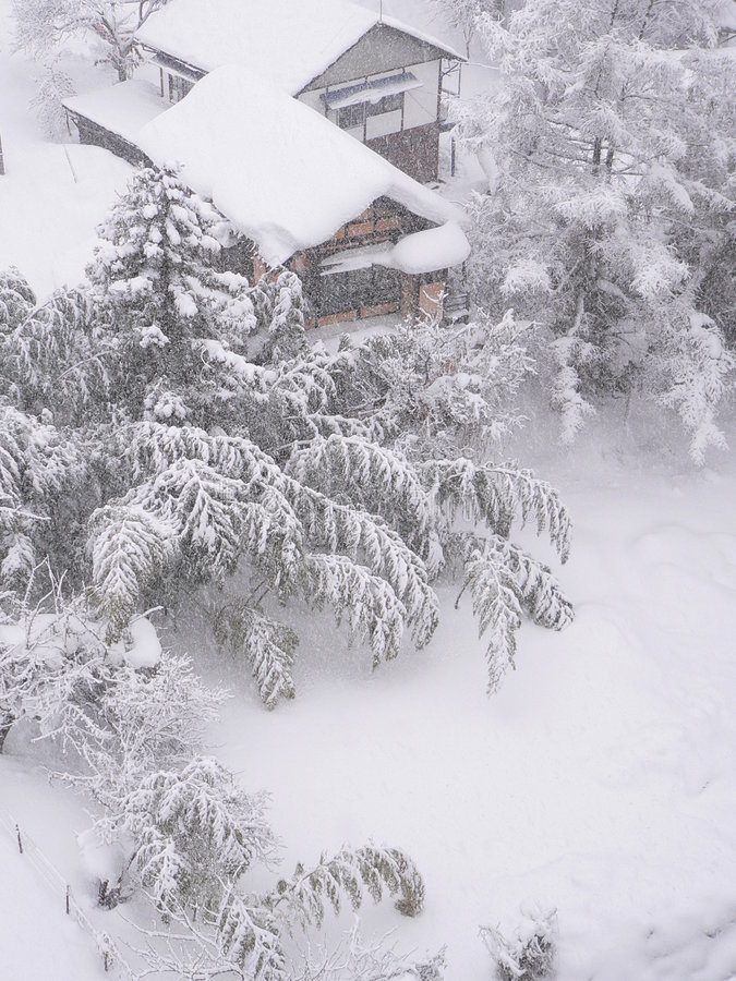 Bambusgarten unter dem Schnee stockbild