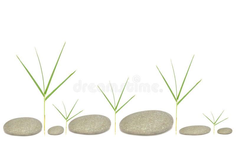 Bambusgras und Kiesel lizenzfreie stockfotografie