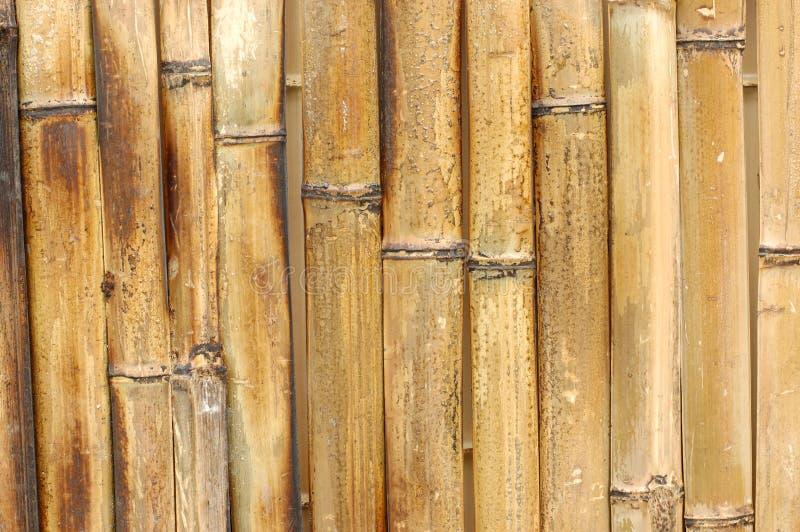 Bambushintergrund lizenzfreie stockfotografie