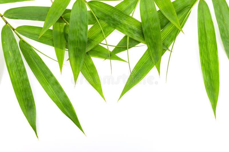 Bambusidaram som isoleras på vit bakgrund arkivfoton