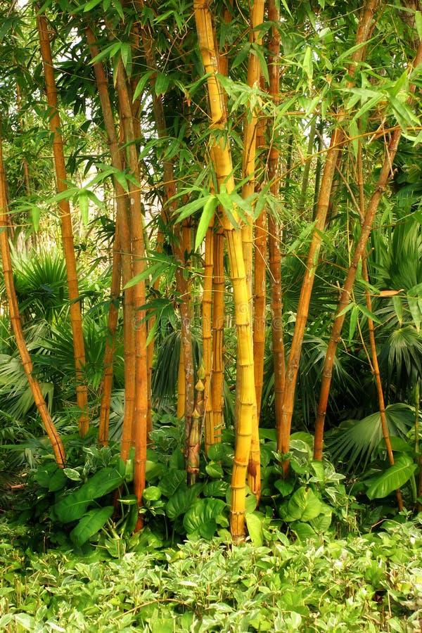 Download Bambuskog fotografering för bildbyråer. Bild av skog, lövverk - 280895