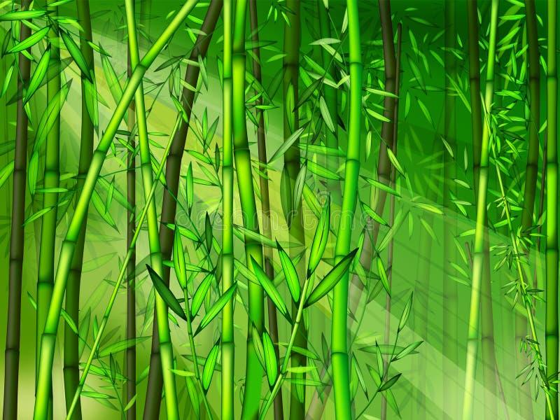 bambuskog vektor illustrationer