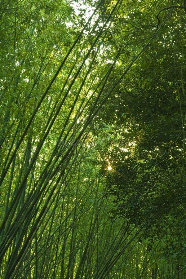bambuskog royaltyfri foto