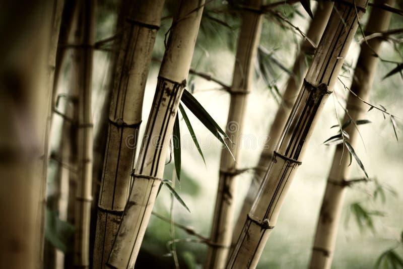 bambuskog arkivbilder