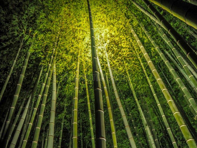 Bambuskog för ljus upp till royaltyfri bild