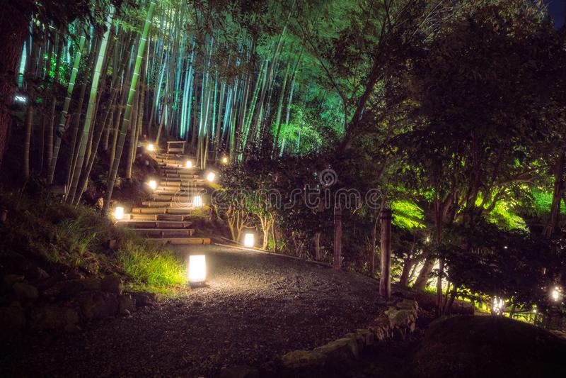 Bambuskog i Kodaiji tempelträdgårdar, Kyoto, Japan arkivfoton