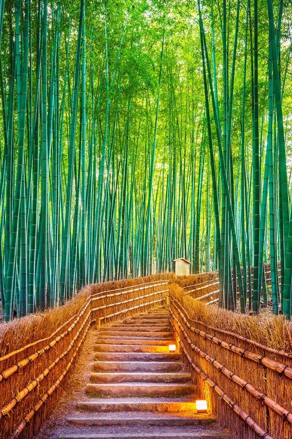 Bambuskog i Kyoto, Japan royaltyfri foto