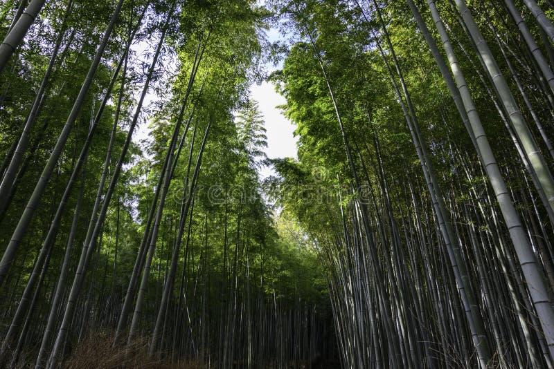 Bambuskog med hjärta i Kyoto Japan royaltyfri foto