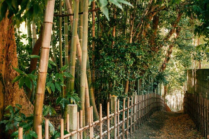 Bambuskog och liten smutsgränd, Sakura stad, Chiba, Japan royaltyfri bild