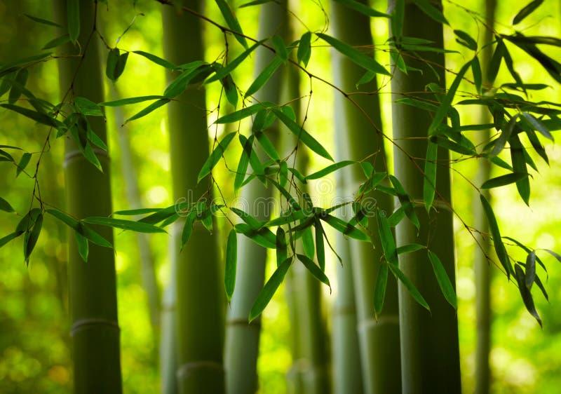 Bambuskogbakgrund arkivbild