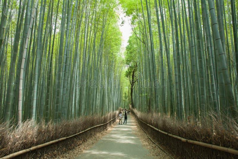 Bambuskogbana, Kyoto, Japan arkivfoto