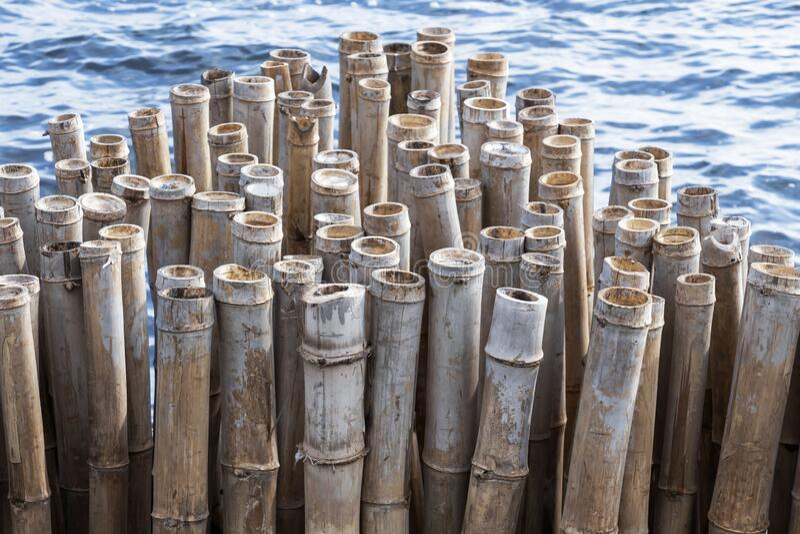 Bambusowa ściana ogrodzeniowa to falochron chroniący las brzegowy i mangrowy przed erozją fal i burzą w morzu Spokojnie idylliczn zdjęcie royalty free
