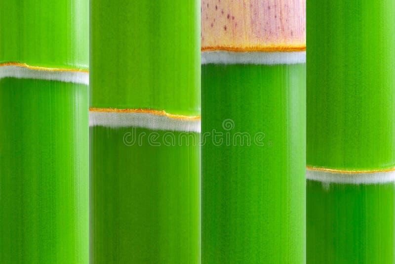 bambusowa świeża zieleń zdjęcia stock