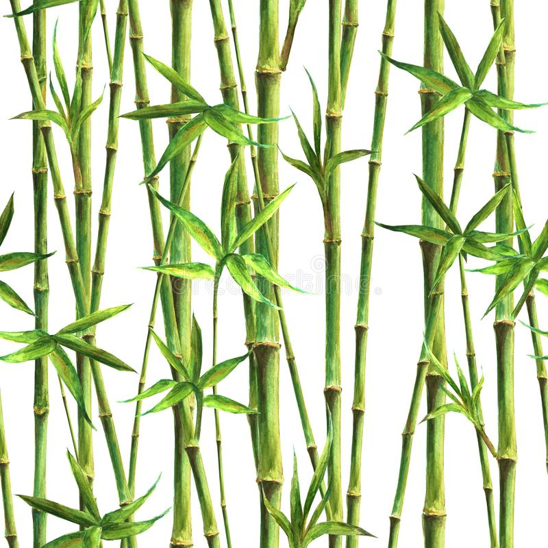 Bambusowa akwarela wywodzi się bezszwowego wzór na białym tle i opuszcza zdjęcie stock