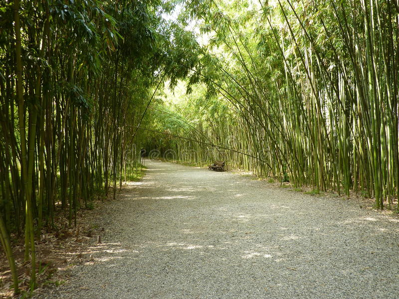Bambusowa aleja obraz stock