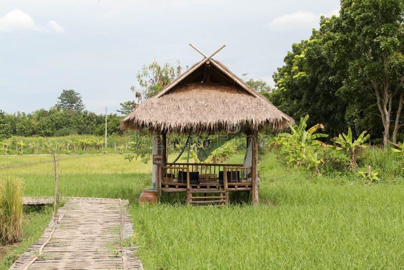 Bambusowa buda na ry?owym gospodarstwie rolnym obraz stock