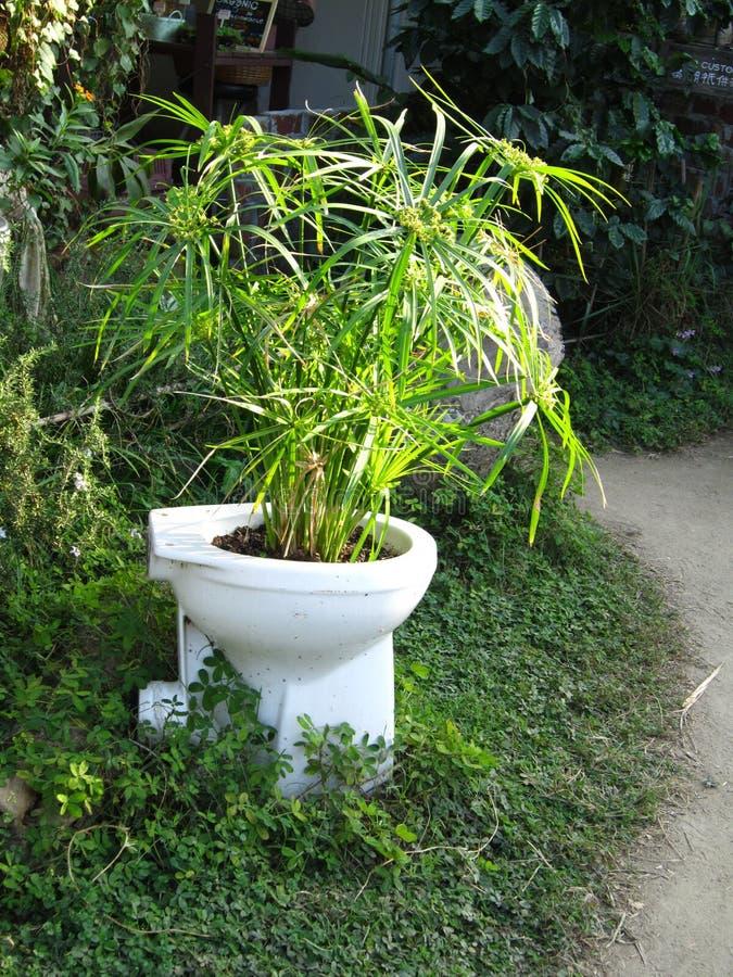 Bambusowa dorośnięcie formy toaleta przy Lamma wyspą HK zdjęcie royalty free