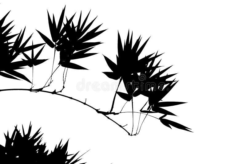 bambusowa ilustracja
