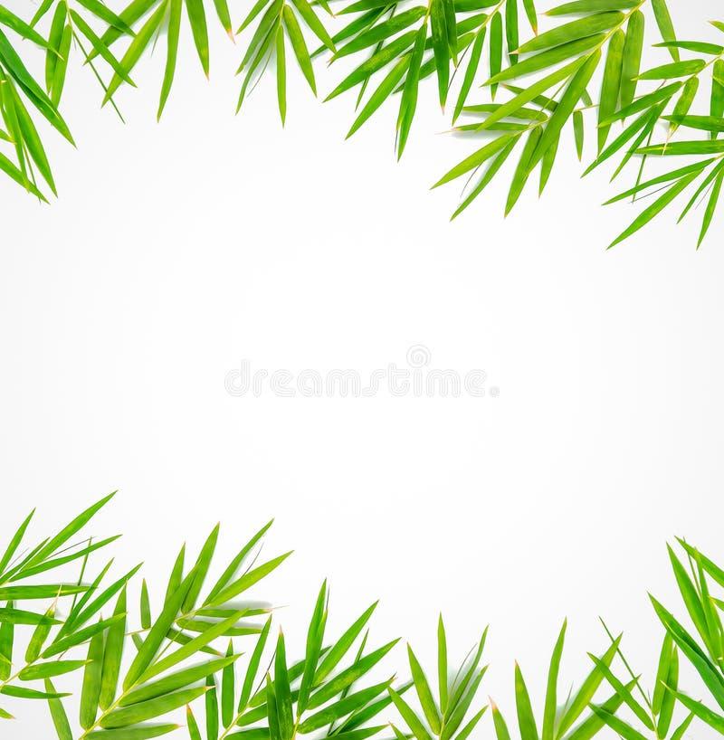Bambusowa liść granica zdjęcie stock
