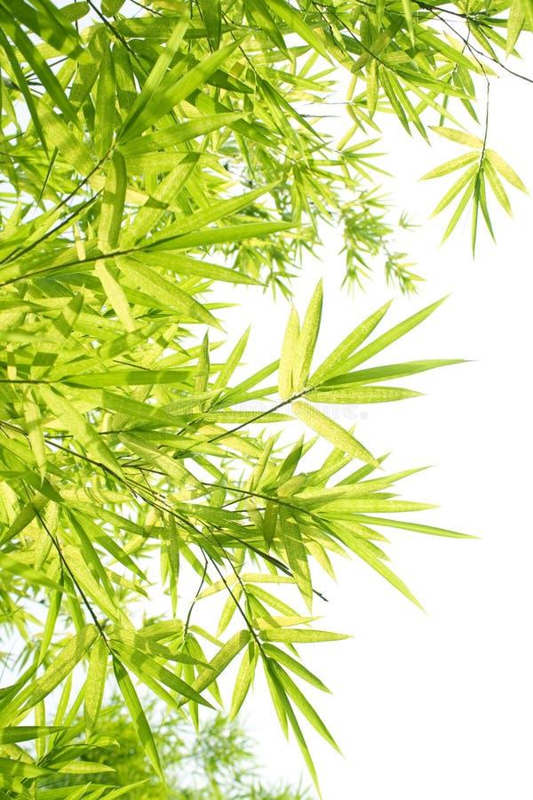 bambusowa piękna granica obrazy royalty free