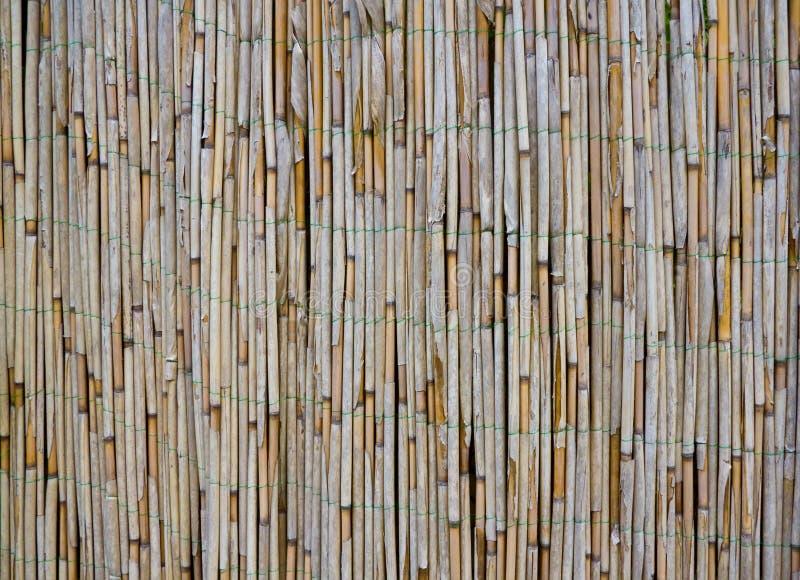 Bambusowa Stara Trzcinowa Tekstura Obrazy Stock