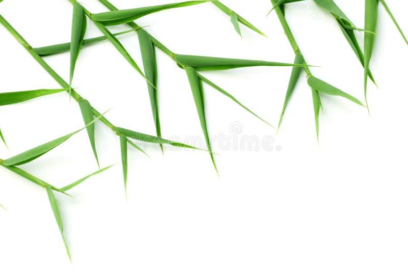 bambusowi dekoracyjni liść zdjęcia royalty free