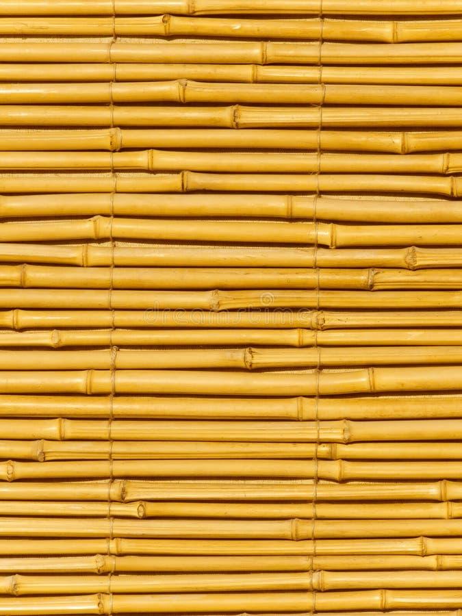 bambusowi drzewni bagażniki fotografia stock