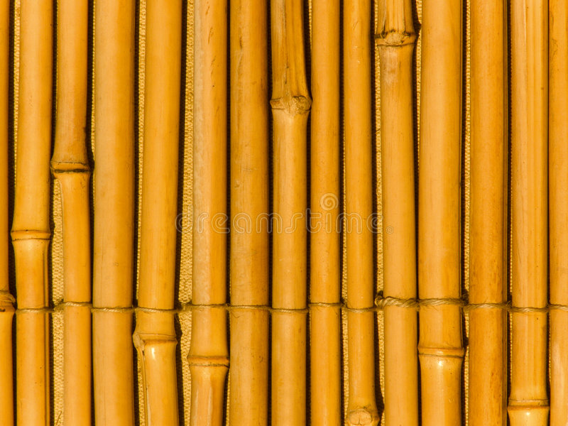 bambusowi drzewni bagażniki obrazy royalty free